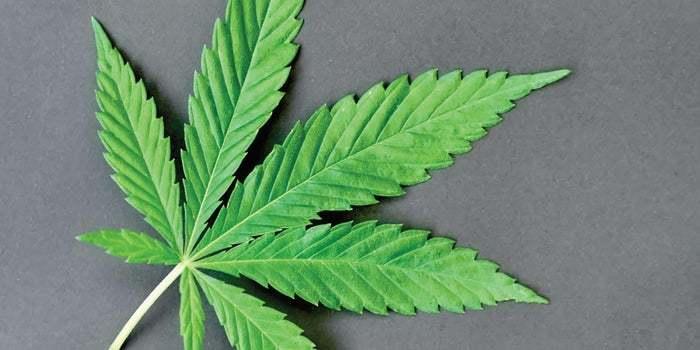 cannabis business social network